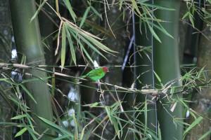 grøn fugl